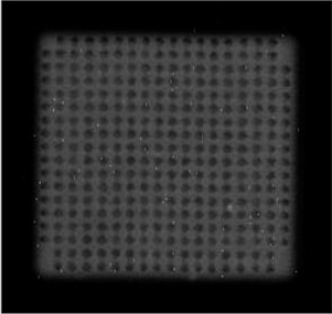 Figure 3: CSAM image of underfill viewed at the die-underfill interface, full-area-array lead-free bumps